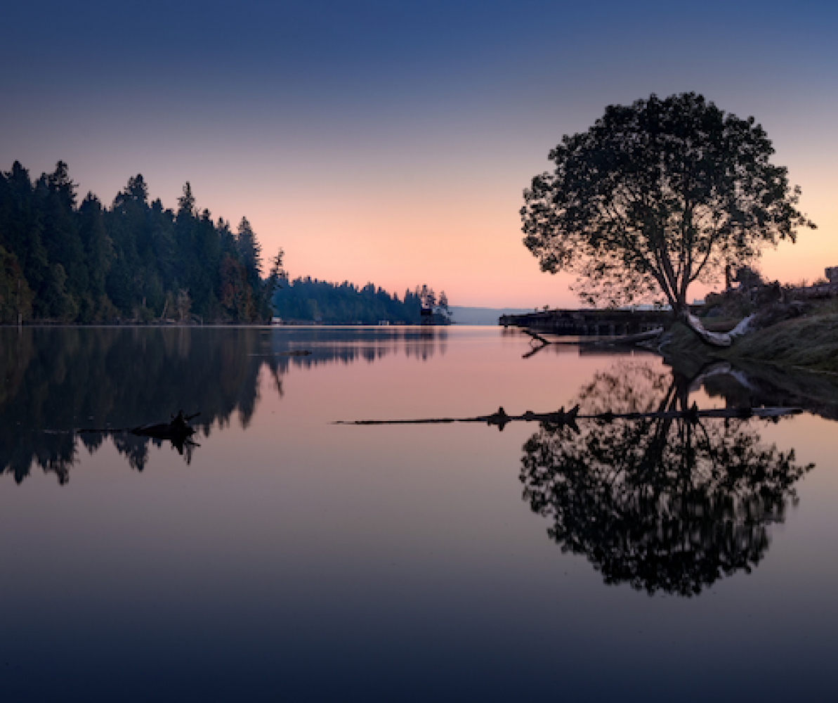 picture of tree reflected in lake